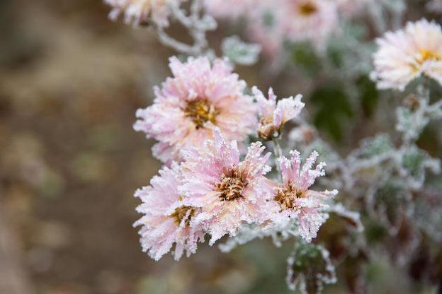 Winter Ornamental Plant Care in Northern Utah
