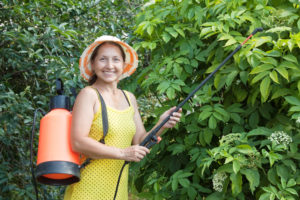 Fruit Tree Pest Control