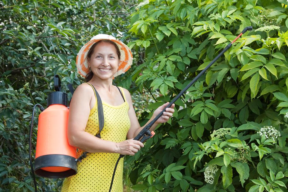 Fruit Tree Pest Control In Utah