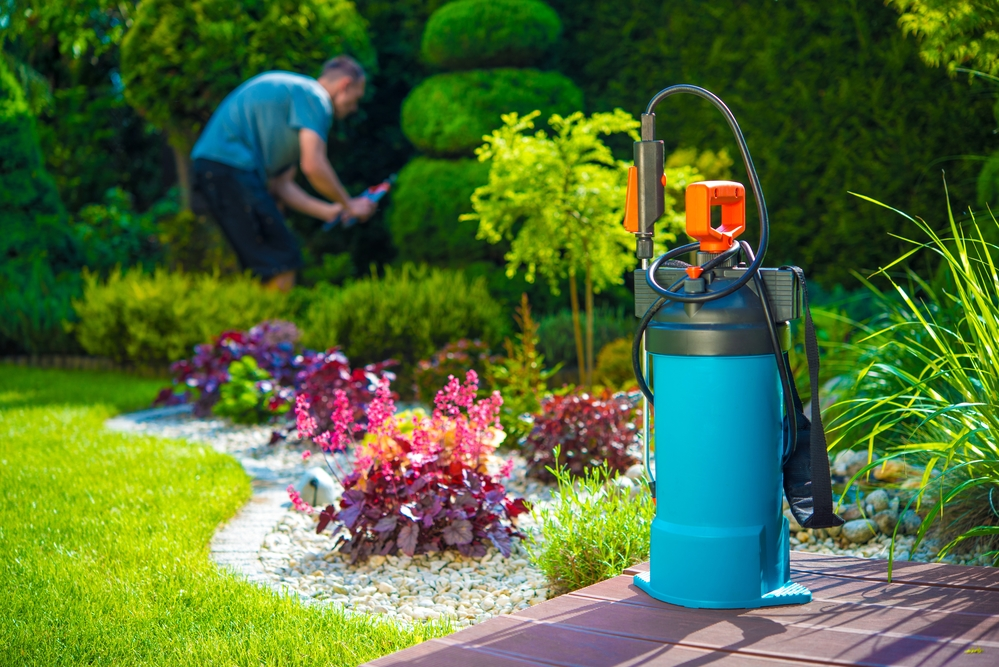 DIY Pest Control May Cause More Problems Than It Corrects