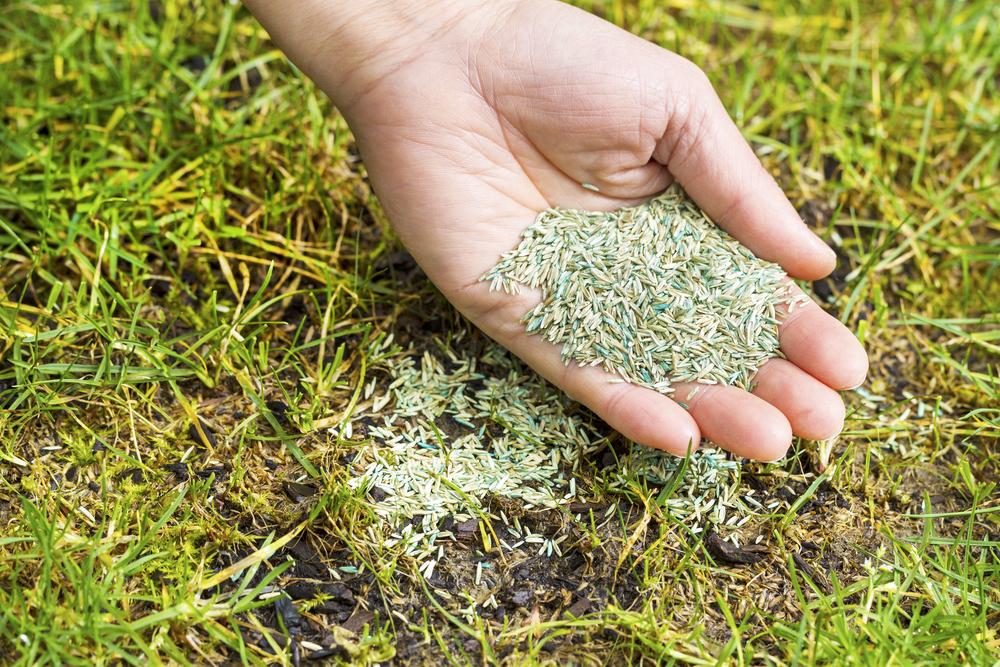Dormant Grass Seeding In Utah
