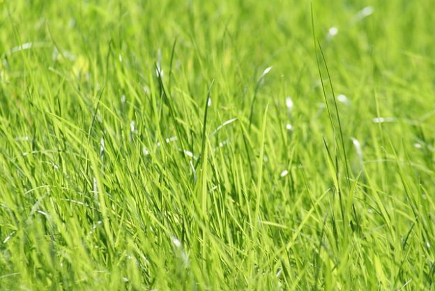 Lawn Fertilization Provo Utah