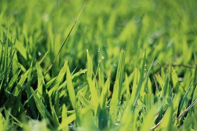 Freshly cut Utah grass
