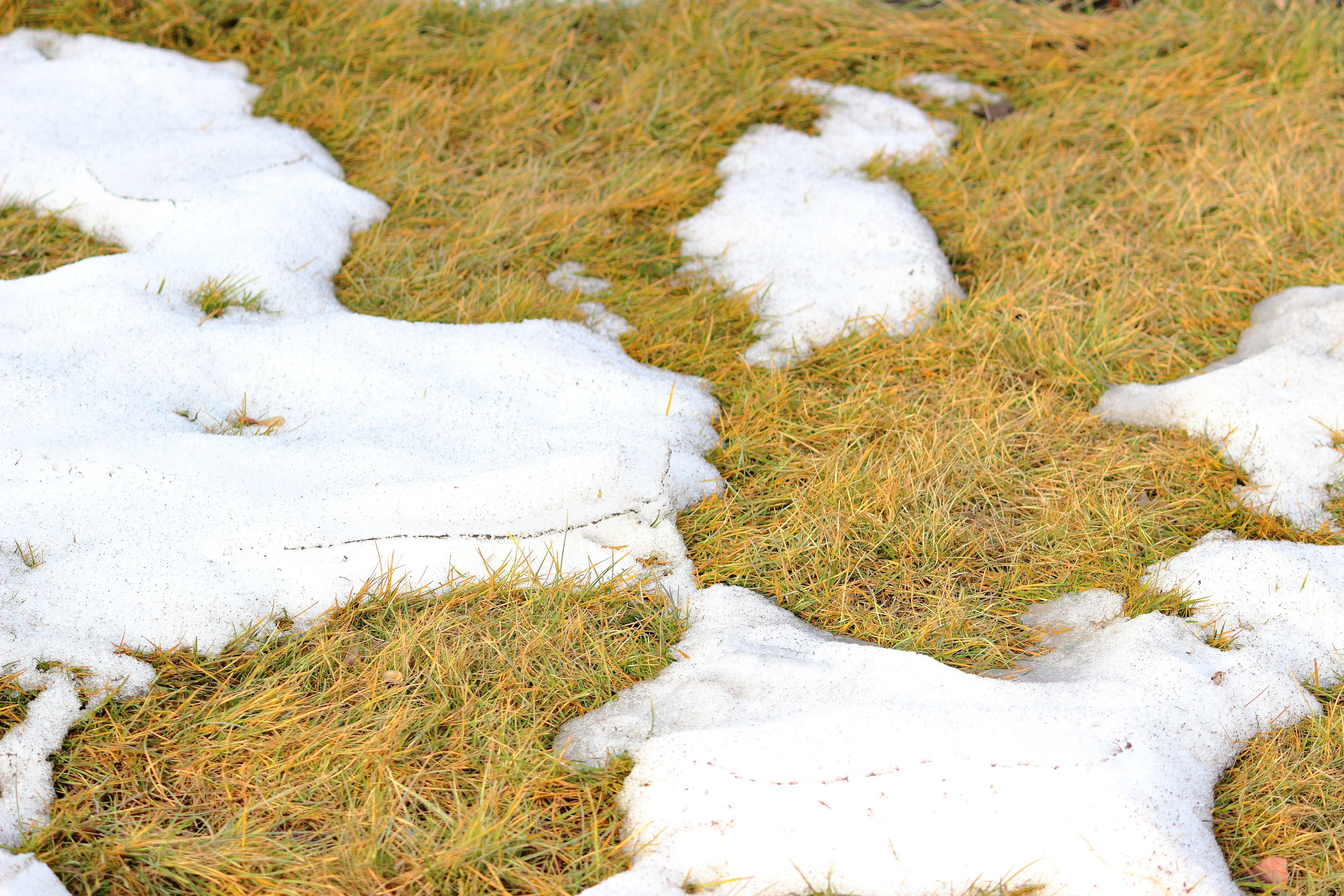 Spring snow melting on the grass.Texture of crystallized melting snow on green grass. Top view.