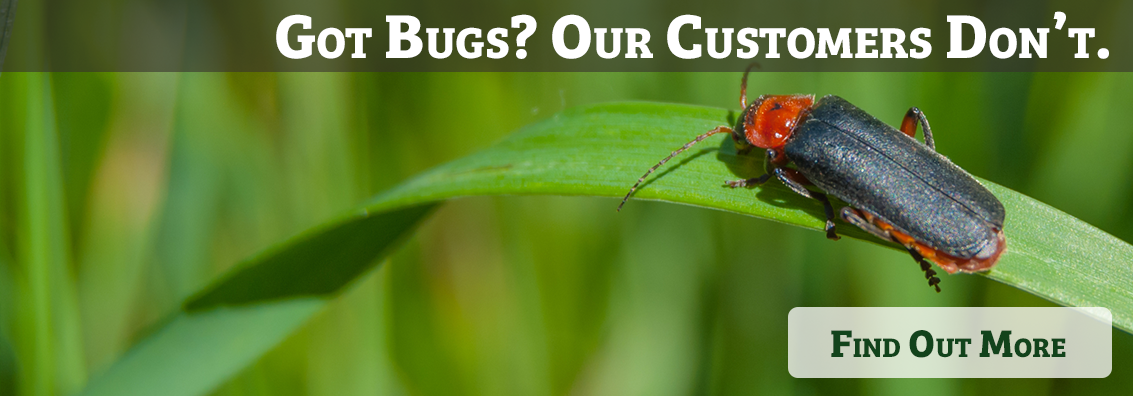 Bed Bugs Pest Control in Provo Utah County