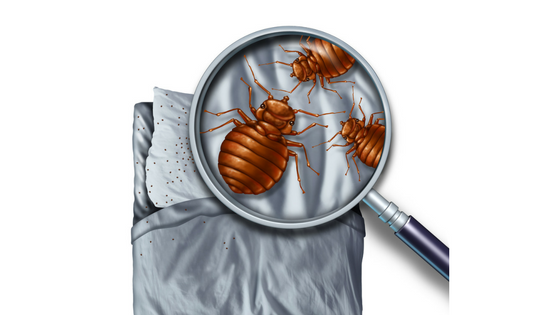 How to Treat your Home for Bed Bugs