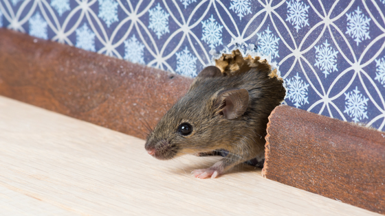 "Tips for ""Rodent-Proofing"" Your Home"