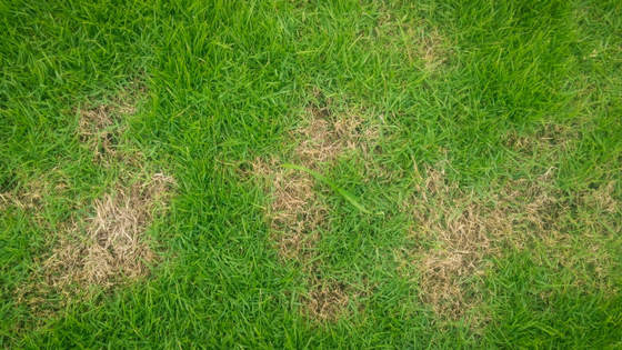 How To Solve Three Of The Biggest Problems With Your Lawn