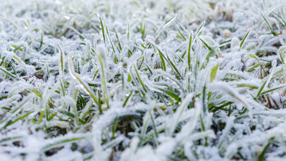 Why Winter Lawn Care is Necessary