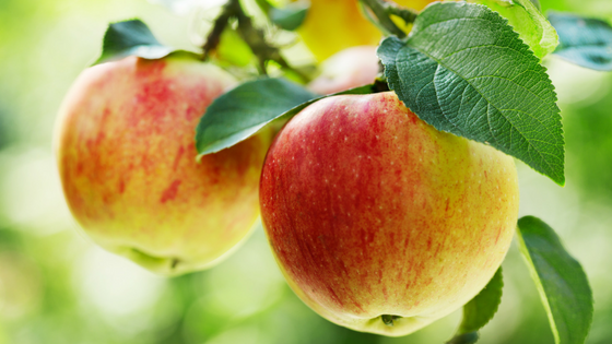 The 3 Best Fruit Trees To Have In Your Yard