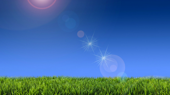How To Maintain Your Lawn In Extreme Summer Heat
