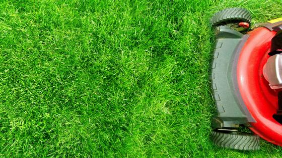 Top Lawn Mowers of 2018