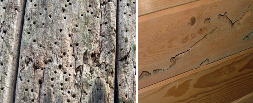 Utah Termites Pest Control Blow Holes and Wood Excavation
