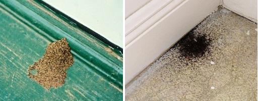 Utah Termites Pest Control Frass