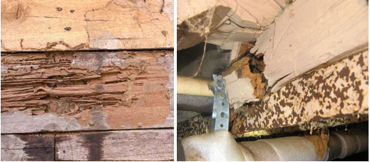 Utah Termites Pest Control Sagging Floors and Walls