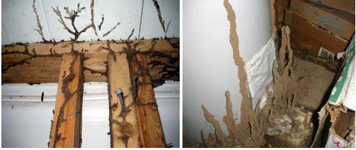 Utah Termites Pest Control Shelter Tubes