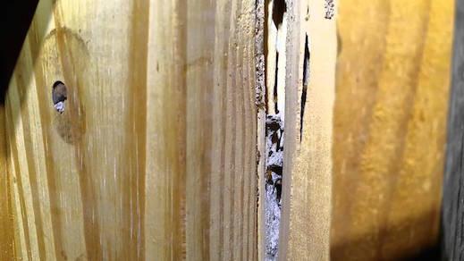 Utah Termites Pest Control Termite Noise