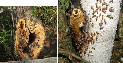 Utah Termites Pest Control Tree Nesting