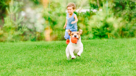 How To Have A Dog & A Beautiful Healthy Lawn