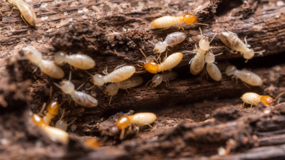 Signs You Have Termites