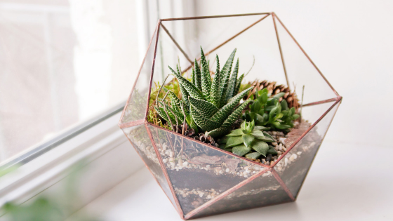 How To Take Care of Your Succulents