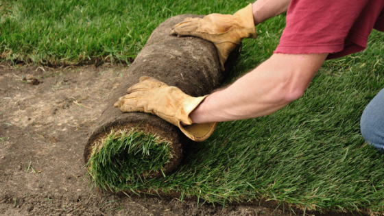 Laying Sod vs. Planting Seed