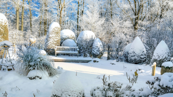 Winterizing Your Garden To Save Your Plants For Next Year