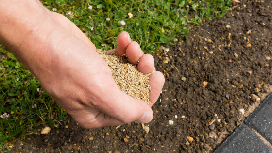How To Buy Quality Grass Seed?