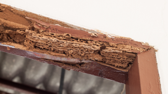 Termite Removal: What Does It Entail?