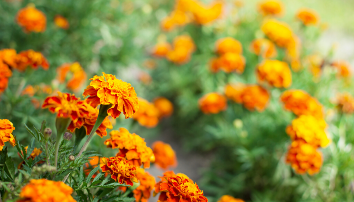 Plants That Can Handle Hot Temperatures
