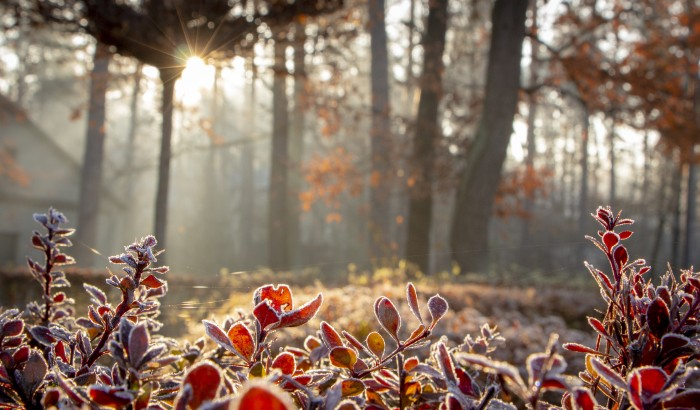Winterizing Your Plants: A Step-By-Step Guide
