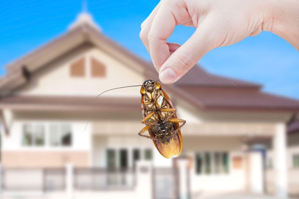 9 Pest Control Myths Debunked