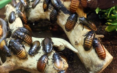 Got Roaches? Here's How to Get Rid of Roaches in Your Home