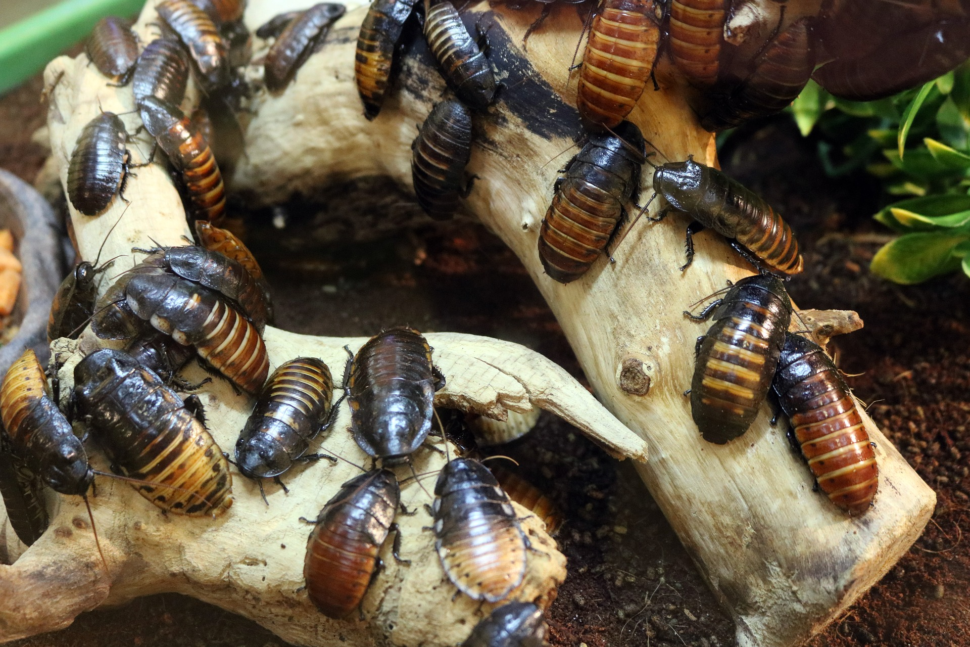 Natural ways on how to get rid of roaches in your home.