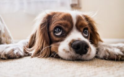 How To Keep Your Pets Safe During Pest Control Services