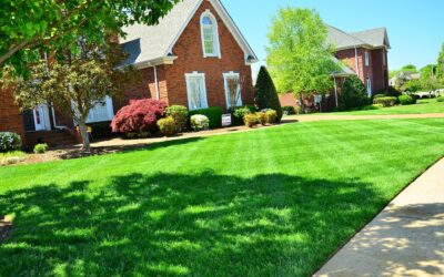 The Ultimate Lawn Edger Beginner's Guide for Homeowners